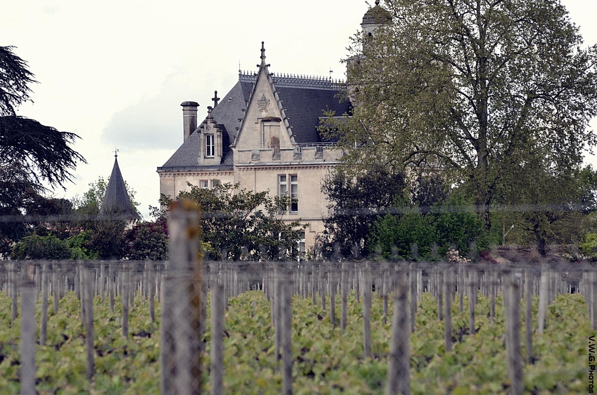 Les vignes de Pessac Léognan